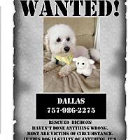 Adopt A Pet :: Dallas - Suffolk, VA