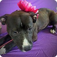Adopt A Pet :: Regina - Flint, MI