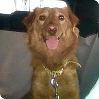 Adopt A Pet :: April - Aurora, CO