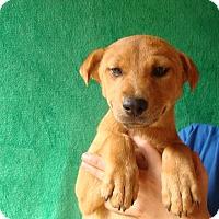Adopt A Pet :: Pecan - Oviedo, FL