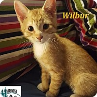 Adopt A Pet :: Wilbur - Loves to Play! - Huntsville, ON