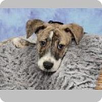 Adopt A Pet :: Tango - Pittsboro, NC