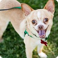Adopt A Pet :: Sax - Tucson, AZ