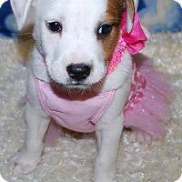 Adopt A Pet :: Pudgey - Waupaca, WI
