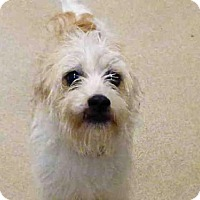 Adopt A Pet :: FRANKIE - Fort Wayne, IN