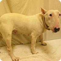 Adopt A Pet :: *LUCY - Upper Marlboro, MD