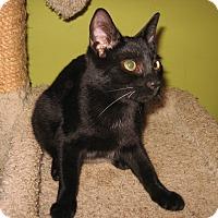 Adopt A Pet :: Kenan - Colmar, PA