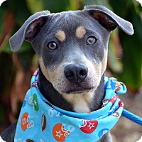 Adopt A Pet :: Hayes - Palmyra, PA