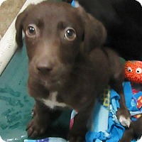 Adopt A Pet :: Gracie - Glenwood, MN