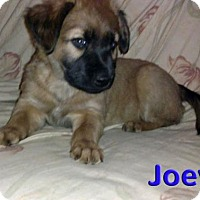 Adopt A Pet :: 'N SYNC Litter: Joey (pending adoption) - Akron, OH