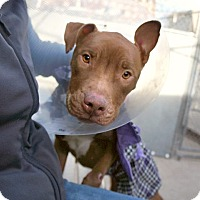 Adopt A Pet :: Miracle - New York, NY