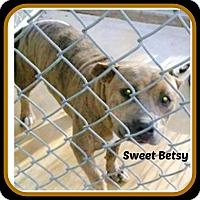 Adopt A Pet :: SWEET BETSY - Malvern, AR