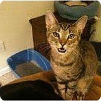 Adopt A Pet :: Angel (x-large) - Sterling Hgts, MI