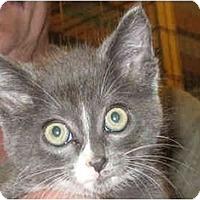 Adopt A Pet :: Christi - Catasauqua, PA