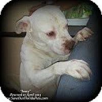 Adopt A Pet :: Ivory - Eustis, FL