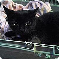 Adopt A Pet :: Tripod - Toronto, ON