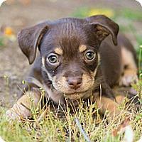 Adopt A Pet :: Bubba - La Habra Heights, CA