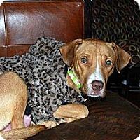 Adopt A Pet :: Anna - East Rockaway, NY