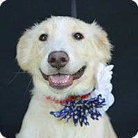 Adopt A Pet :: Jazz - Plano, TX