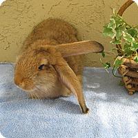 Adopt A Pet :: Troy - Bonita, CA