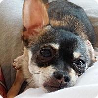 Adopt A Pet :: Doogie - Dayton, OH