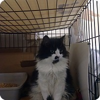 Adopt A Pet :: Ma Belle - Centralia, WA