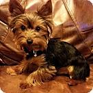 Adopt A Pet :: Minnow