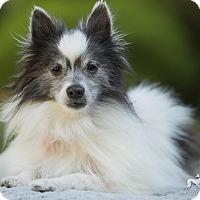 Adopt A Pet :: Lucky - Salem, OR