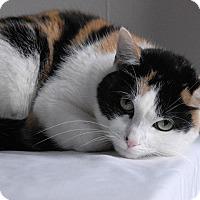 Adopt A Pet :: Patience - Winchendon, MA
