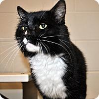 Adopt A Pet :: Salazar - Aiken, SC