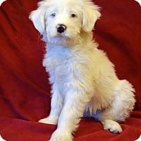 Adopt A Pet :: *Arctic aka Artie - PENDING - Westport, CT