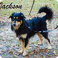 Adopt A Pet :: Jackson - Daleville, AL