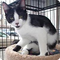 Adopt A Pet :: Jasper - Longview, WA