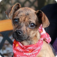 Adopt A Pet :: Darcy - Garfield Heights, OH