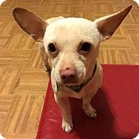 Adopt A Pet :: Bosco - Clarkston, MI
