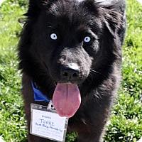 Adopt A Pet :: Topaz - Adopted! - San Diego, CA