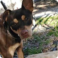 Adopt A Pet :: Manly - Daleville, AL