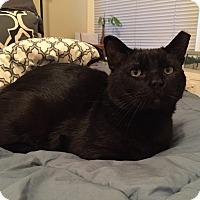 Adopt A Pet :: Rick Ross - Chicago, IL