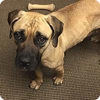 Adopt A Pet :: Bessie - Queenstown, MD