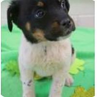 Adopt A Pet :: Taze - Barnegat, NJ