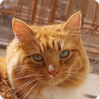 Adopt A Pet :: Apollo - Mountain Center, CA