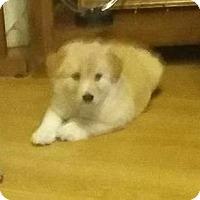 Adopt A Pet :: Jax - Kyle, TX