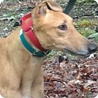 Adopt A Pet :: Lightning Leo - Gerrardstown, WV