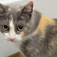 Adopt A Pet :: Muffett160335 - Atlanta, GA