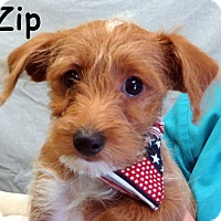 Adopt A Pet :: Zip - Warren, PA