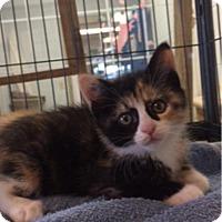 Adopt A Pet :: Amy - Camden, DE
