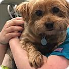 Adopt A Pet :: Smoochie