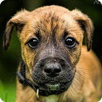 Adopt A Pet :: Winston Churchill - Bloomington, IL