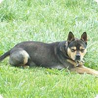 Adopt A Pet :: TAZ - Coeburn, VA