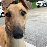 Adopt A Pet :: Joker - Swanzey, NH